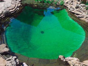 Плавательный-пруд---устройство-пруда-на-участке-Архифлора
