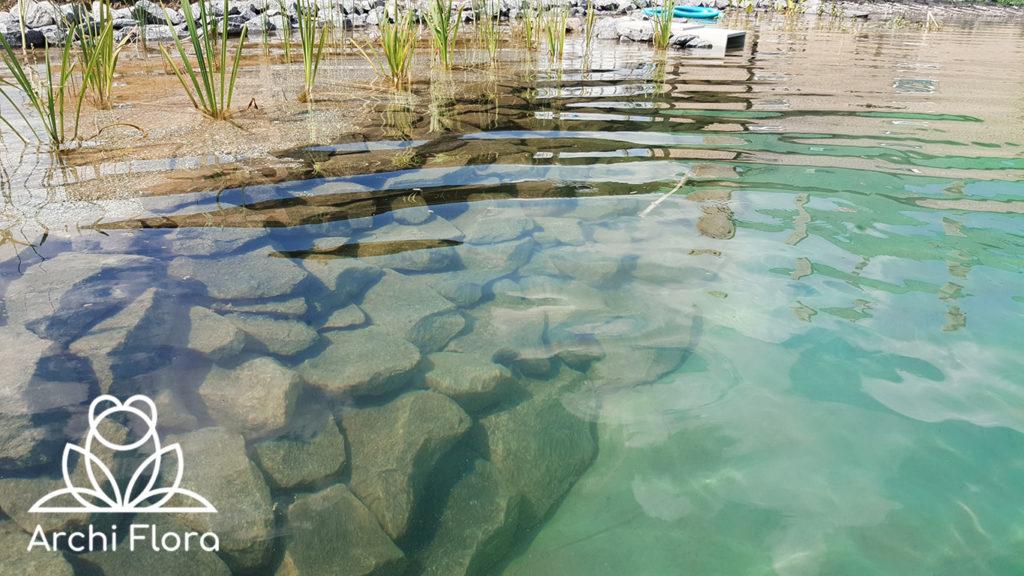 Пример чистой воды в пруду с биоплато - прозрачность воды
