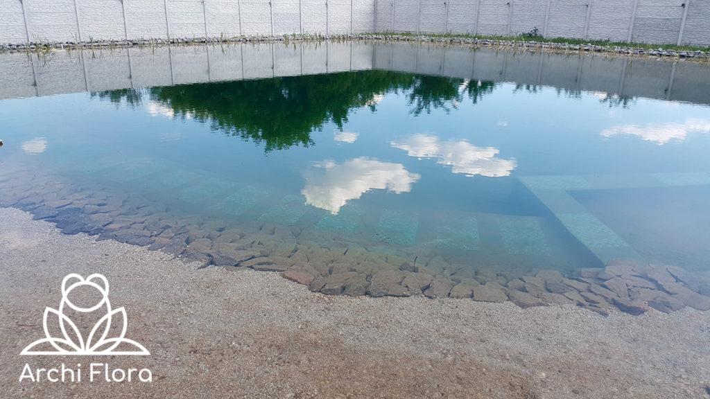 Вода в пруду на 600 м квадратных в Харькове - 2017 год