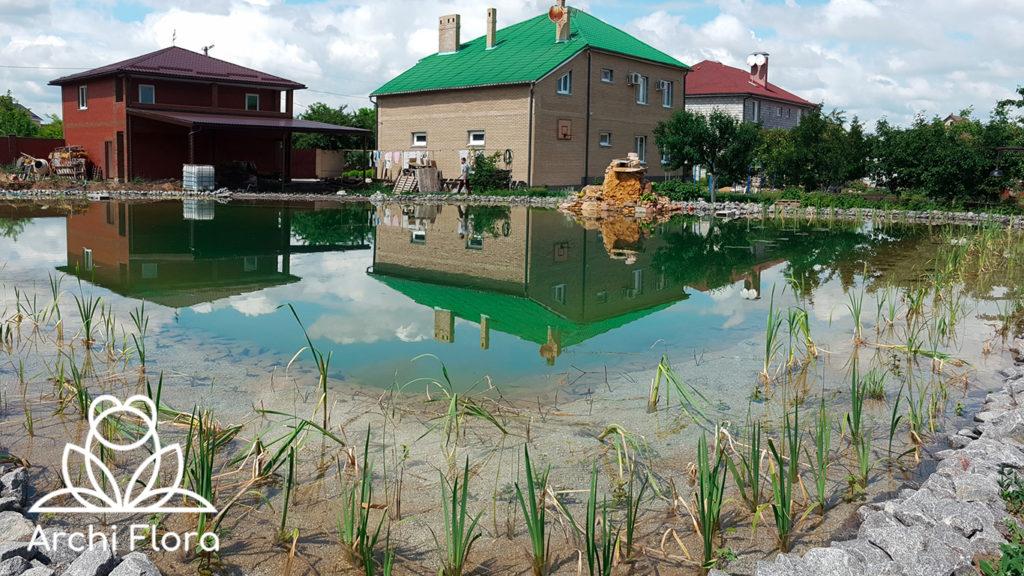 Общий вид пруда - строительство биопрудов в Харькове АрхиФлора