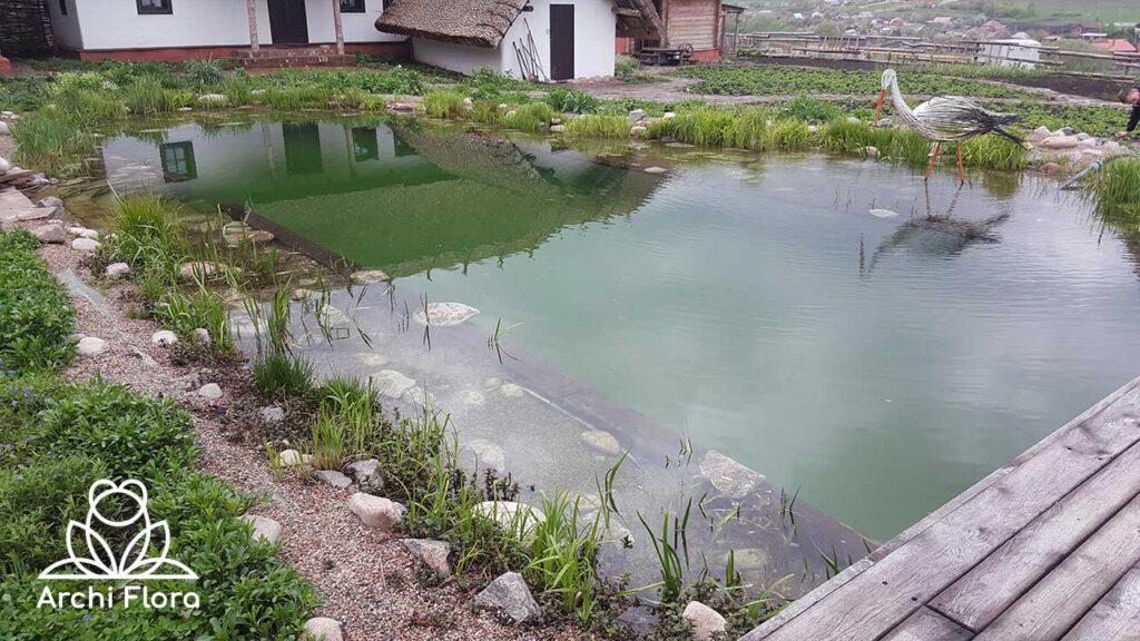 Пример пруда с биологической фильтрацией