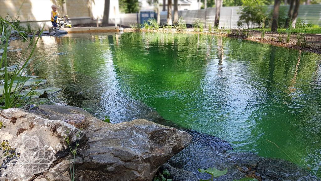 Плавзона пруда и гладь воды 6х3 метра